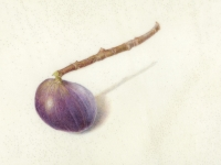 Fig on Vellum